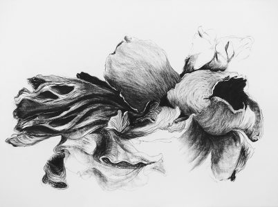 Untitled (2015) charcoal/Saunders Waterford 300g, 56x76 cm