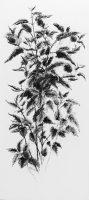 II Urtica dioica (2018) charcoal/coal/bleached linseed oil 76 x 35 cm