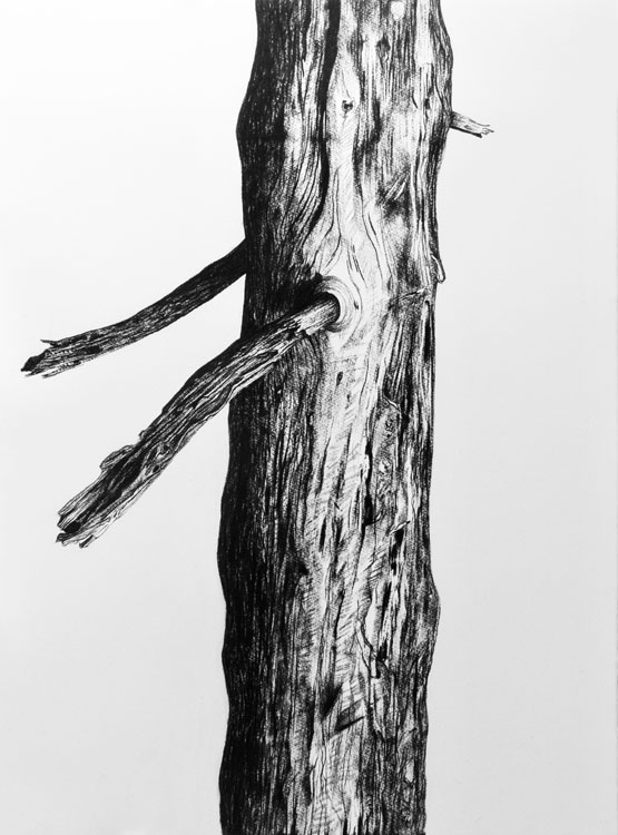 Resurrection (Tree) nr 1 (2019-2020), charcoal/Saunders Waterford 300g 76 x 56 cm