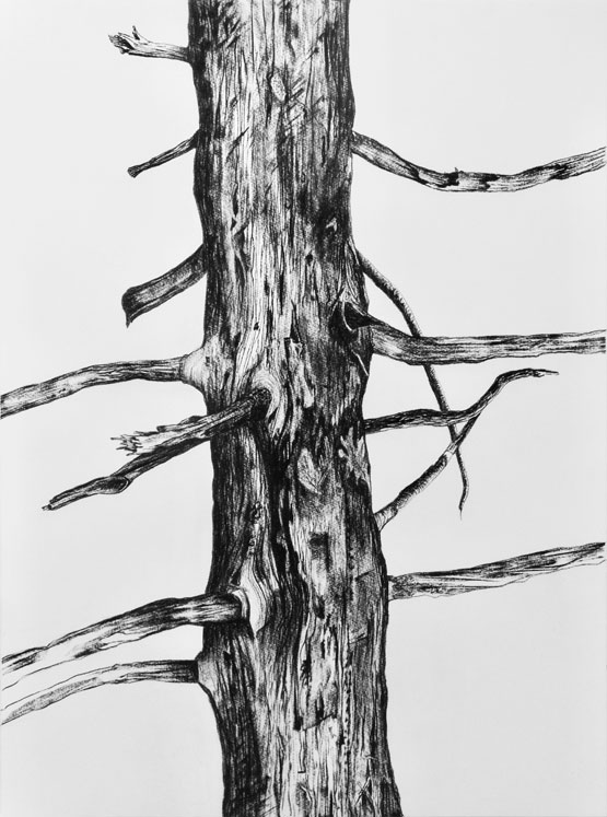 Resurrection (Tree) nr 2 (2019-2020), charcoal/Saunders Waterford 300g 76 x 56 cm