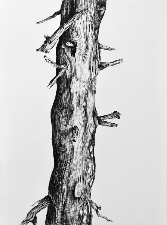 Resurrection (Tree) nr 3 (2019-2020), charcoal/Saunders Waterford 300g 76 x 56 cm