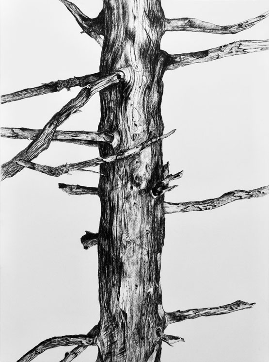 Resurrection (Tree) nr 4 (2019-2020), charcoal/Saunders Waterford 300g 76 x 56 cm