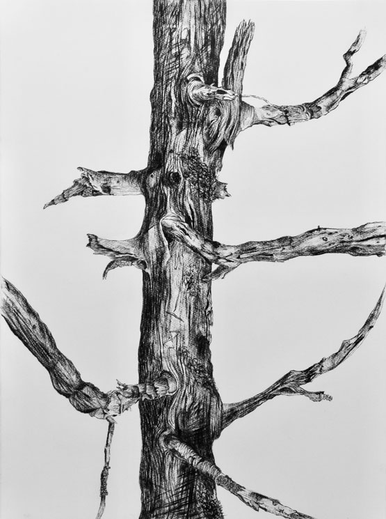 Resurrection (Tree) nr 5 (2019-2020), charcoal/Saunders Waterford 300g 76 x 56 cm