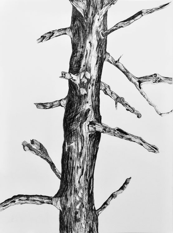 Resurrection (Tree) nr 6 (2019-2020), charcoal/Saunders Waterford 300g 76 x 56 cm