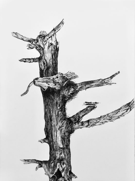 Resurrection (Tree) nr 7 (2019-2020), charcoal/Saunders Waterford 300g 76 x 56 cm